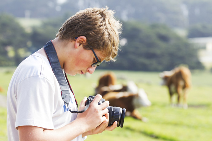 Taking photos of livestock